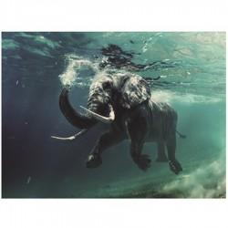 """Impression sur verre """"ELEPHANT"""" 80x120 cm"""